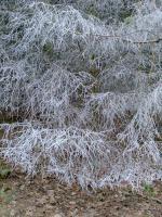 A Frosty Morning