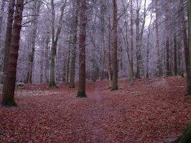 Kinnoul Woods