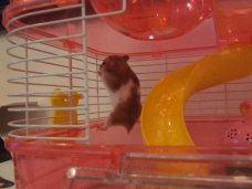 Mrs. Hammy 1