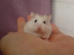 Sweetie - the marathon running hamster