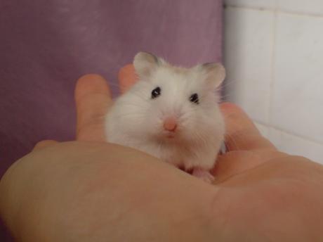 Sweetie on Amanda's hand